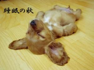 秋の睡眠週間